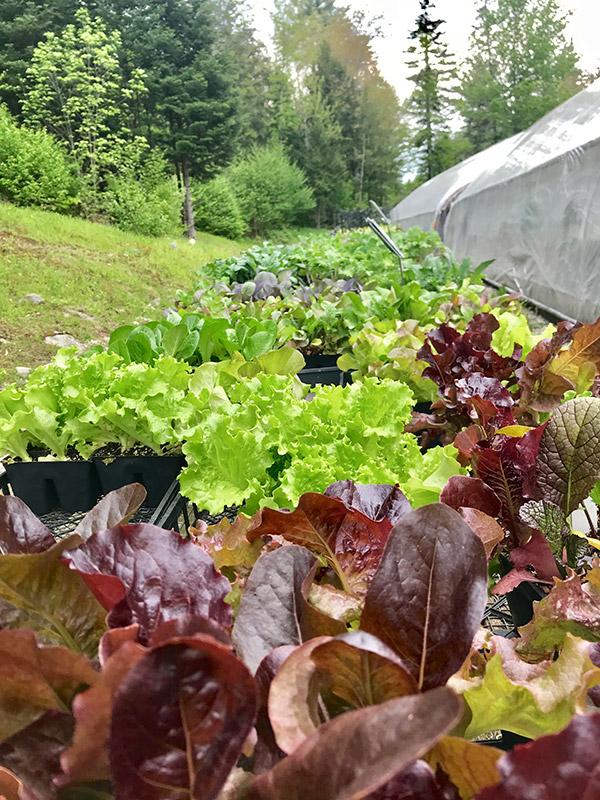 veggies-herbs3